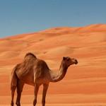 Puščavski avtohtonež / Oman 2010