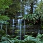 Russel Falls / Tasmanija 2011